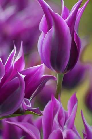 Purple Daydreams..............